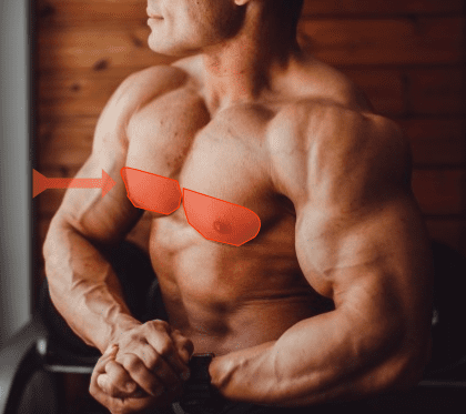 lower chest muscles
