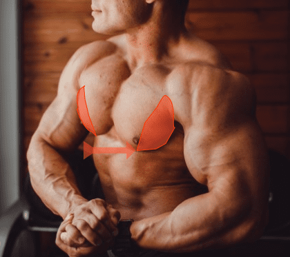 outer chest muscles