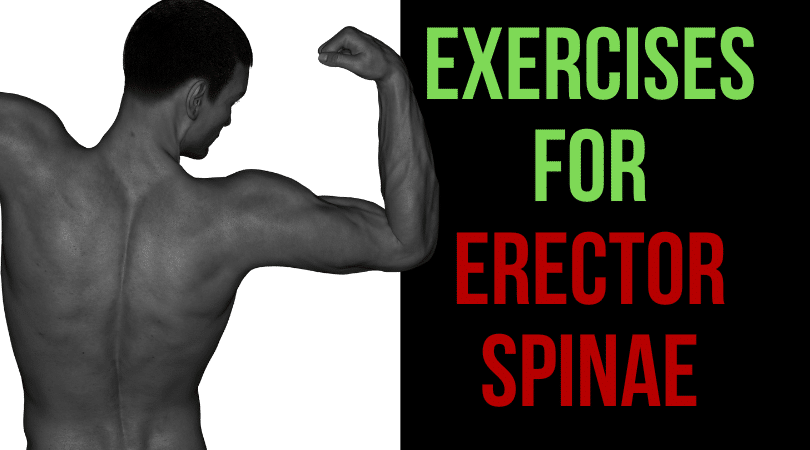 Exercises for Erector Spinae