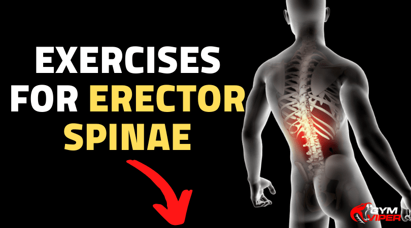Exercises for Erector Spinae IMG